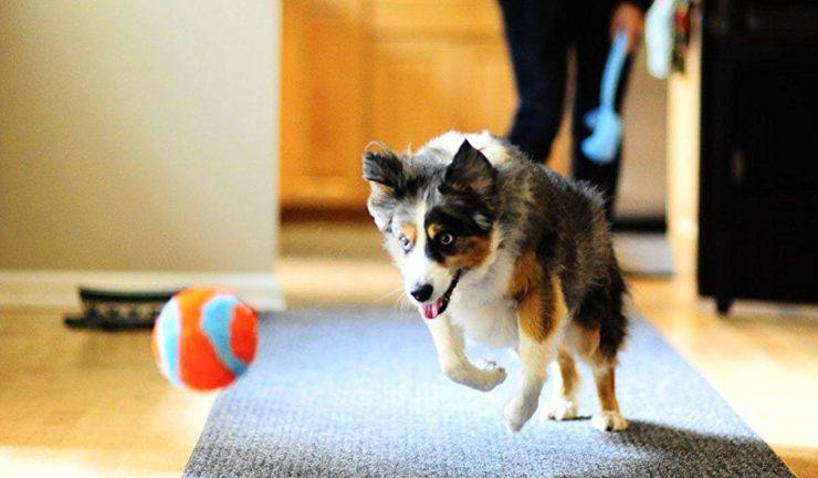 Fido gioca con una pallina