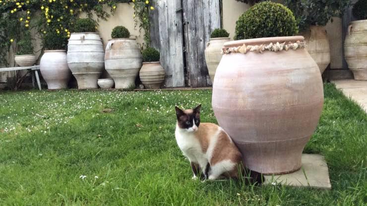 Perché il gatto scava in giardino