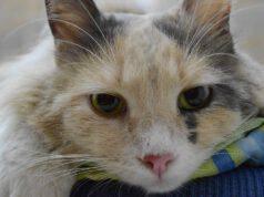 Radioterapia nel gatto