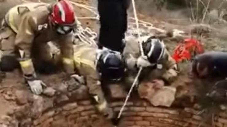 Cane Cade Pozzo 30 Metri Video