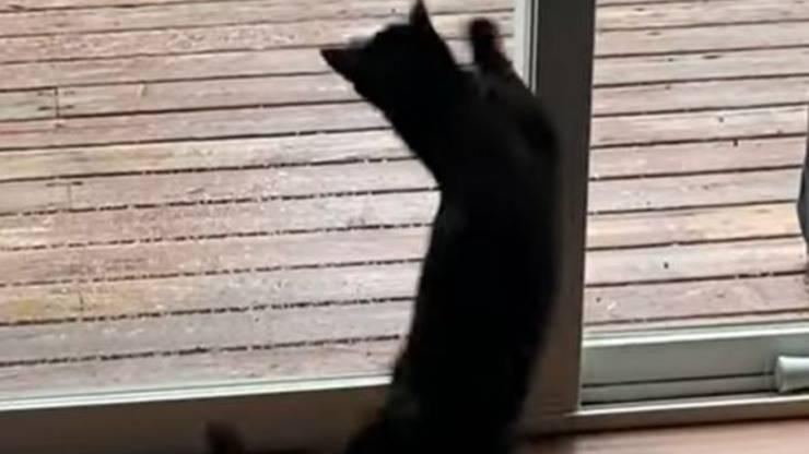 Gatto Attacco Vetro Finestra Video