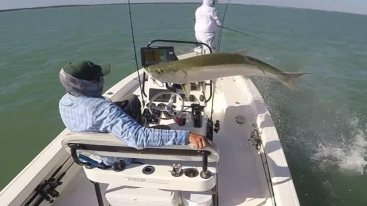 Salto Pesce Pescatore Video