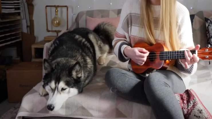 L'husky infastidito (Foto video)
