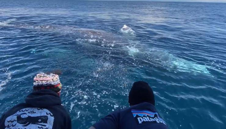 Balene Gommone Turisti Video