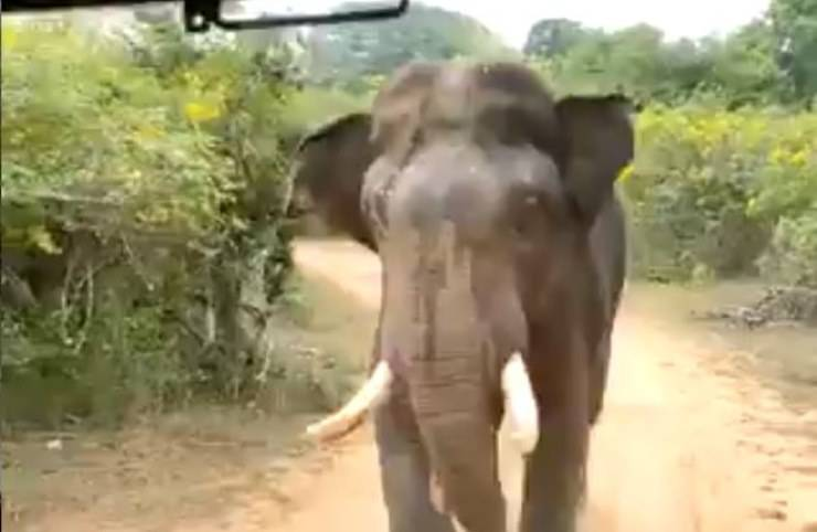 Elefante Turisti Invadenti Reazione Video