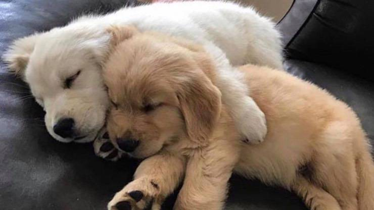 Il letargo nei cani