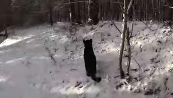 Pantera nella neve (Foto video)