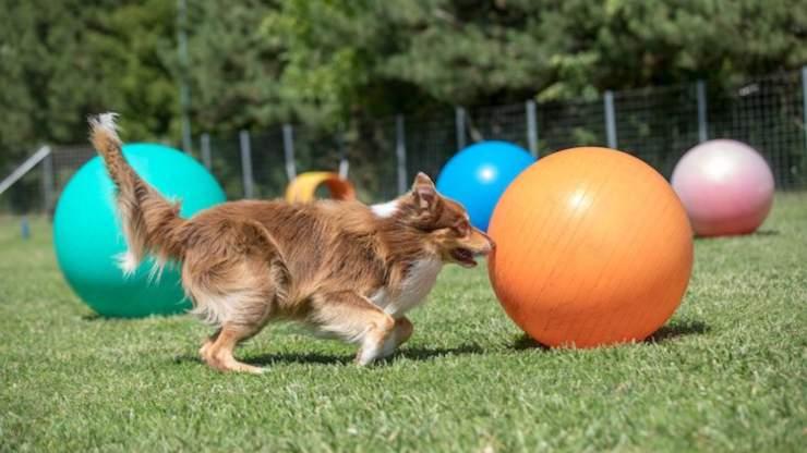 Treibball per il cane