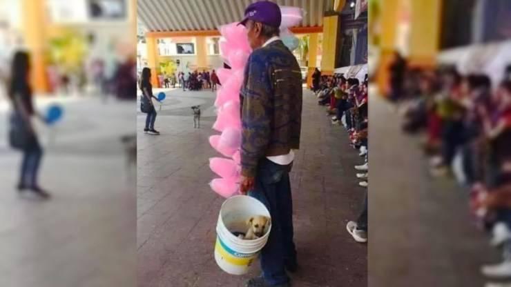 anziano vende zucchero filato cane secchio