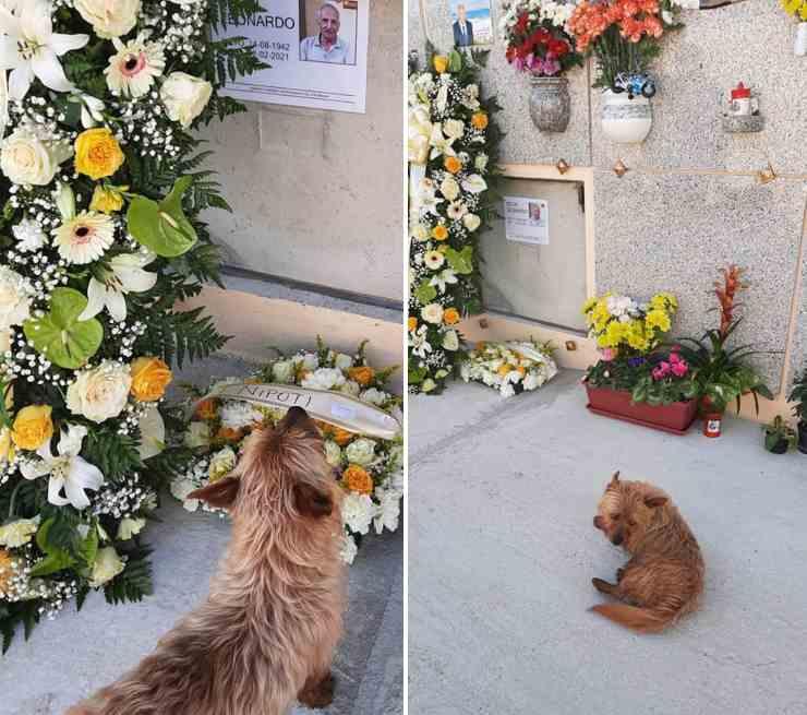 cane tomba proprietario defunto