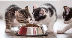 alimentazione senza cereali per il gatto