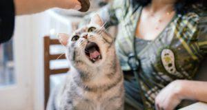 alimenti che i gatti adorano