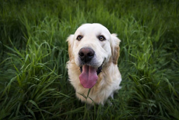 cane gioioso (Foto Pixabay)