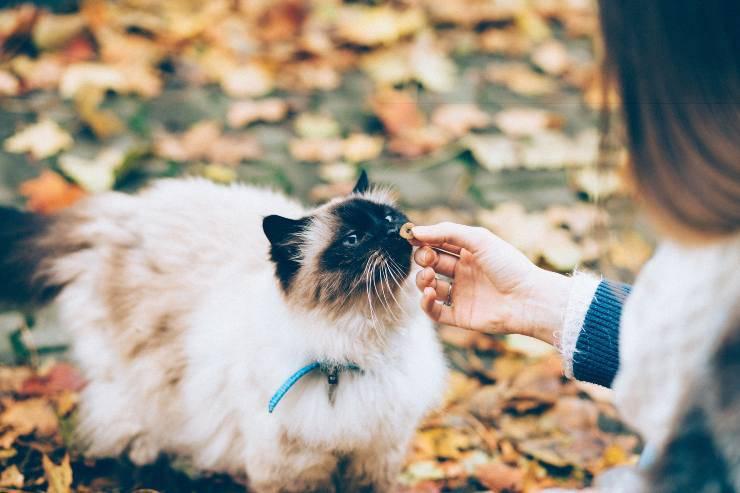 Crusca per il gatto