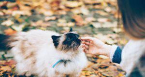 Il felino e la crusca