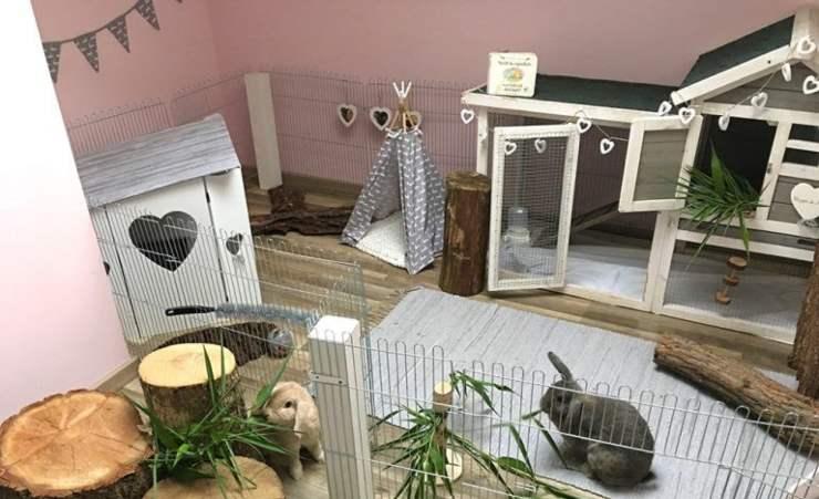 appartamento per coniglio nano