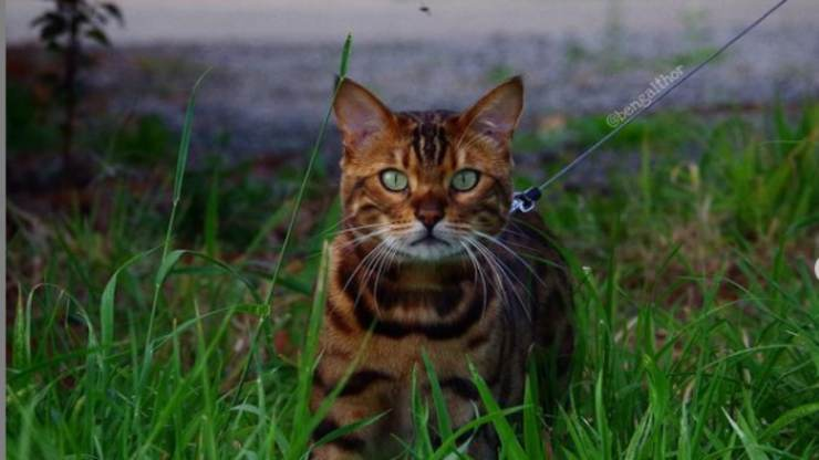 Gatto in posa (Foto Instagram)