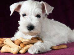 biscotti al pollo per il cane
