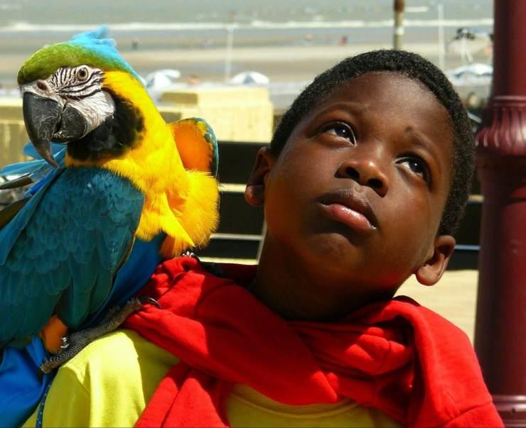 Come fare amicizia con un pappagallo