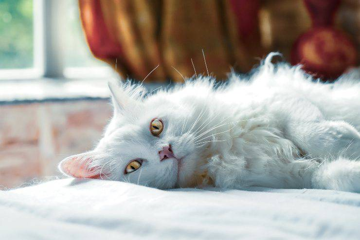 Il disturbo nel gatto