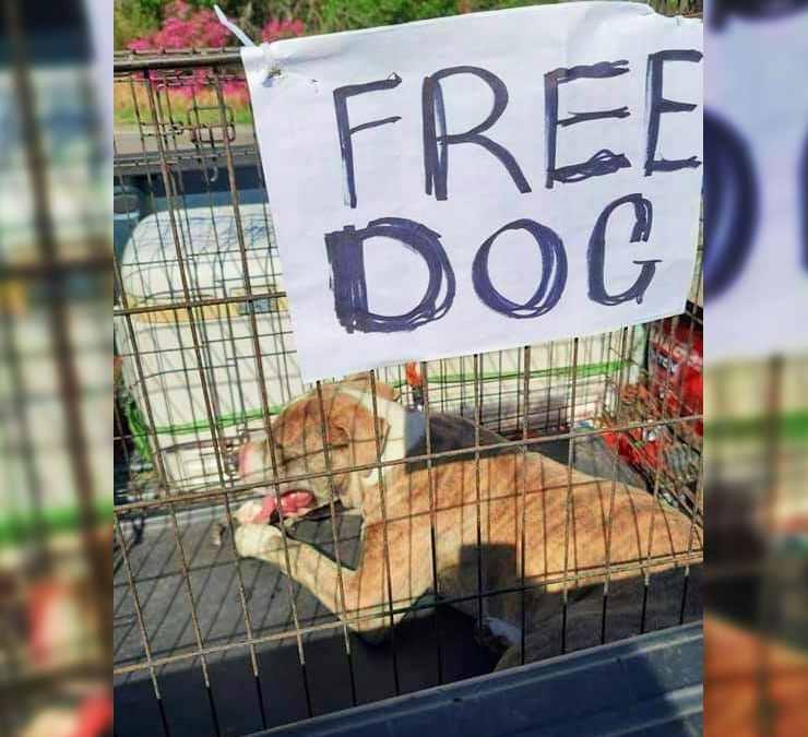 cane chiuso gabbia free dog