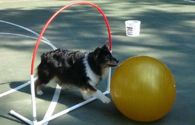 cane e Triabball