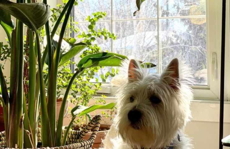 cane e le piante di casa