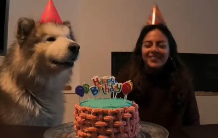 Il compleanno dell'husky (Foto video Instagram)