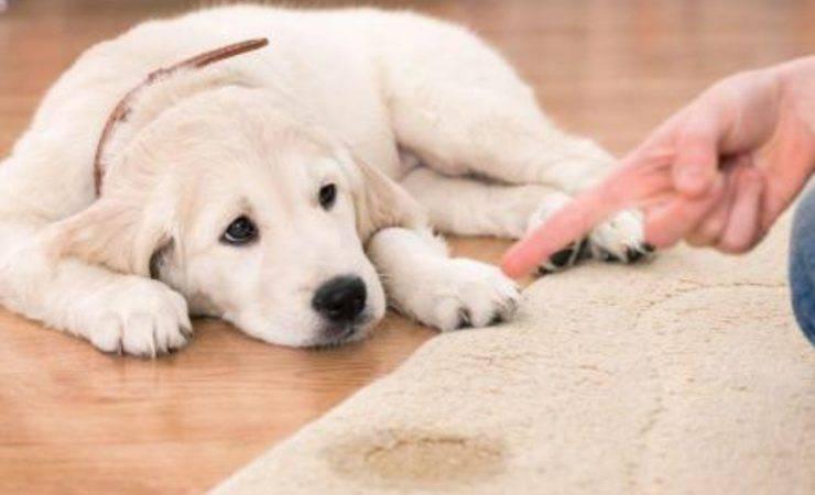 cane fa bisogni ovunque-rimedi