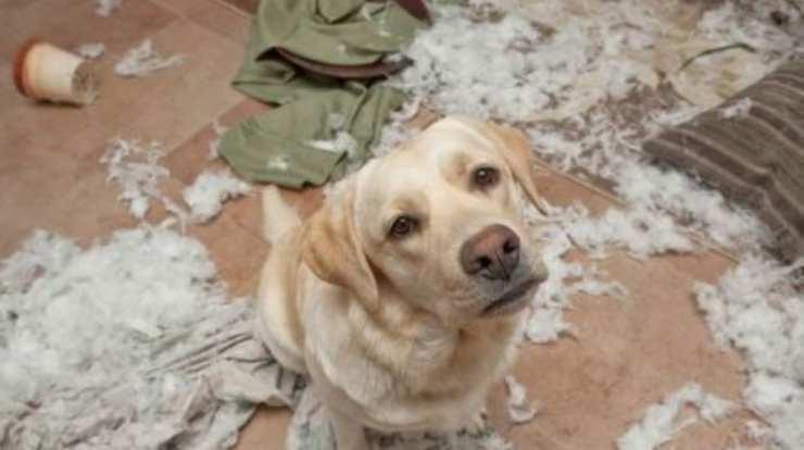 cane ha morso il divano