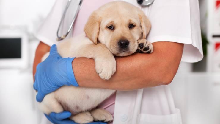 cane può uscire subito dopo prima vaccinazione