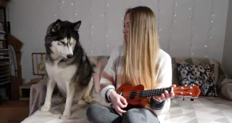 Husky e padrona (Foto video)