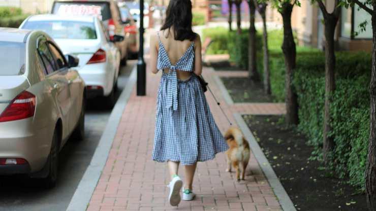 cane vuole tornare subito a casa