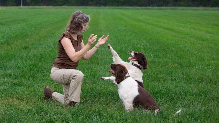cani capiscono applausi