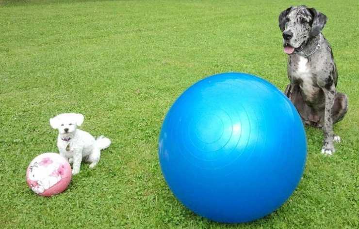 cani con palle da fitness