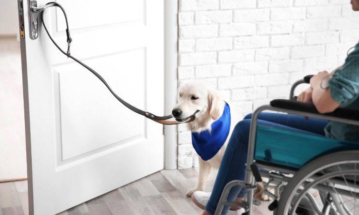 cani da assistenza