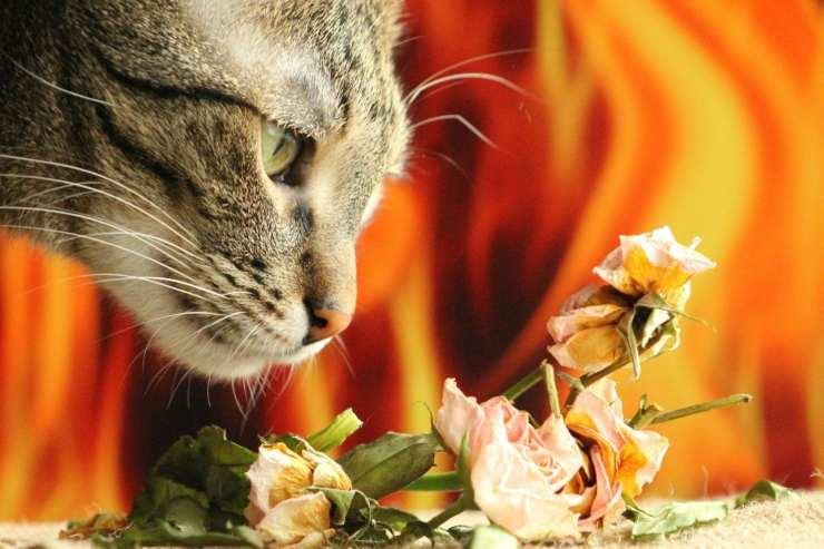 I gatti fiutano tumori nell'uomo