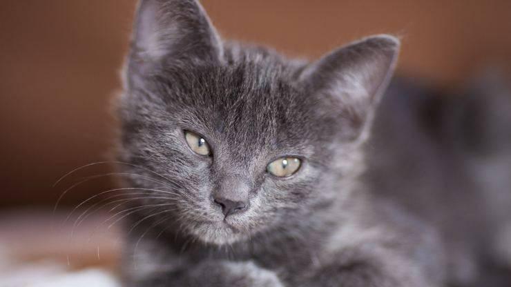 Gattino spaventato (Foto Pixabay)