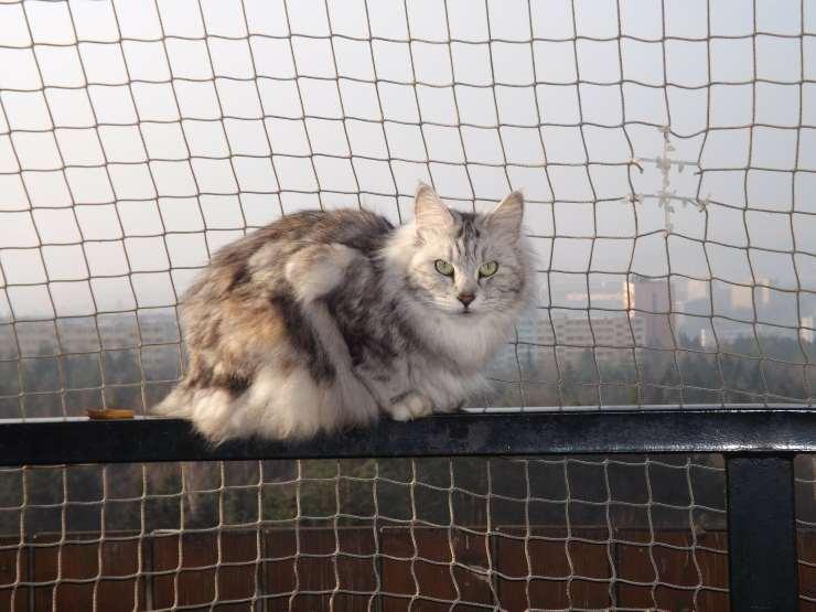 Gatto sulla rete