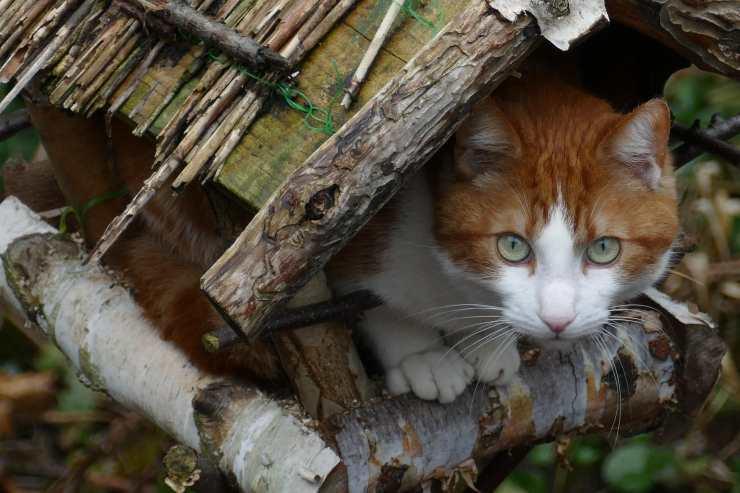 Il gatto osserva gli uccelli