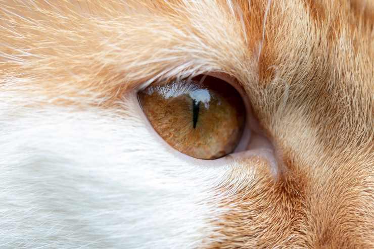 Il gatto e l'ulcera corneale