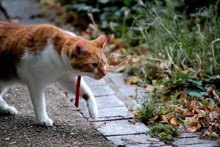 gatto in cammino (Foto Pixabay)