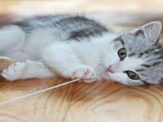 Il gatto danneggia il parquet
