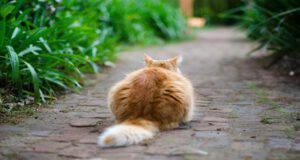 Il gatto e la necrosi della coda
