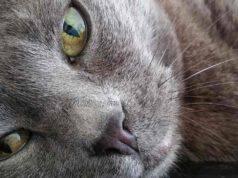 Il gatto ha l'occhio chiuso
