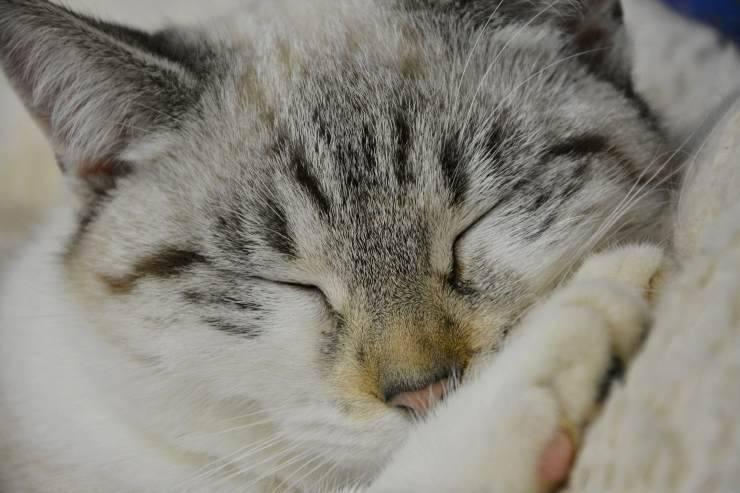 Il gatto dorme nel bidet