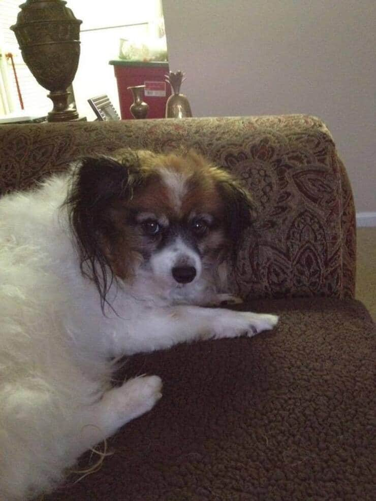 Uno dei cani deceduti dopo l'utilizzo del collare antiparassitario (Foto facebook)