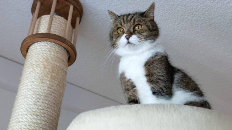 come abituare il gatto a usare il tiragraffi