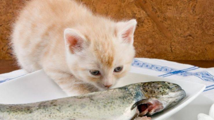 come cucinare il merluzzo al gatto