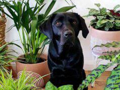 Come impedire al cane di distruggere le piante